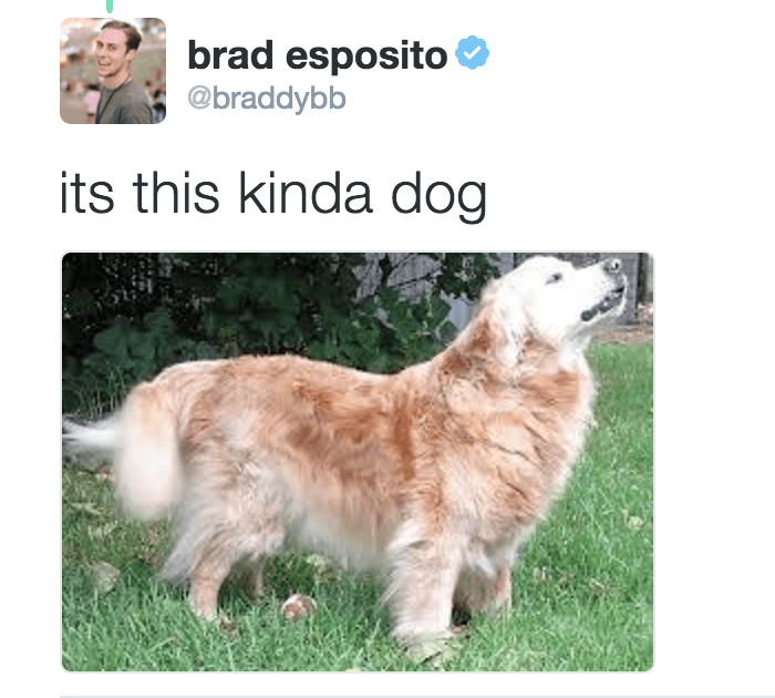 Dog - brad esposito @braddybb its this kinda dog