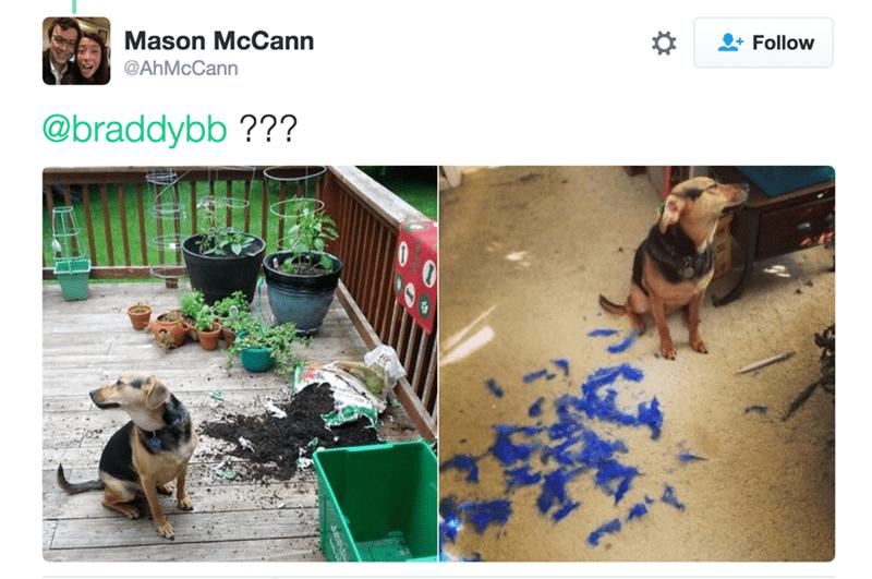 Dog - Mason McCann Follow @AhMcCann @braddybb ???