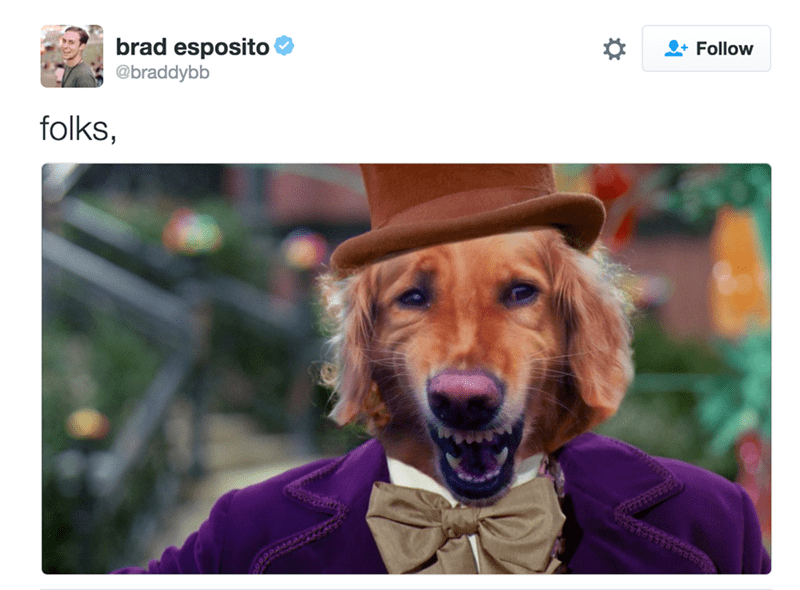 Dog - brad esposito @braddybb Follow folks,