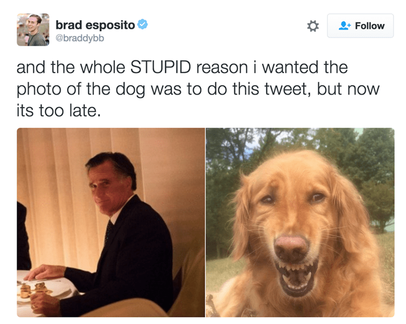 Dog - brad esposito Follow @braddybb and the whole STUPID reason i wanted the photo of the dog was to do this tweet, but now its too late.