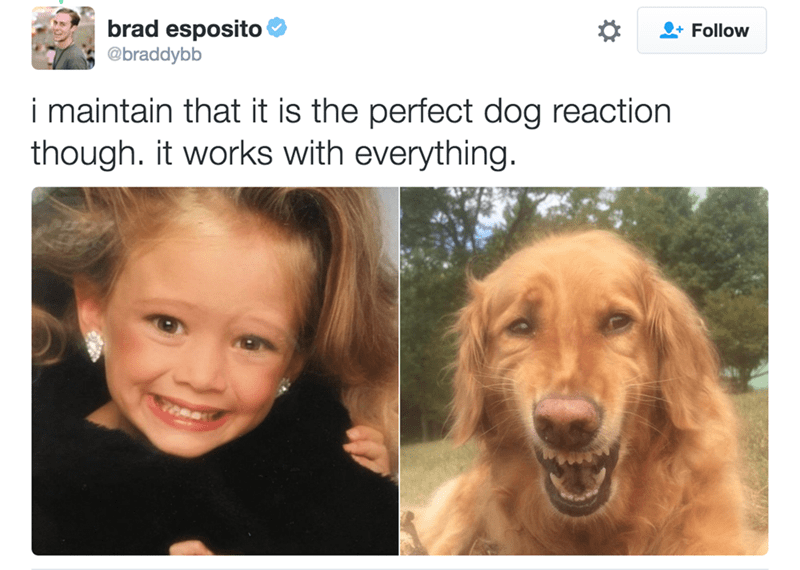 Face - brad esposito @braddybb Follow i maintain that it is the perfect dog reaction though. it works with everything.