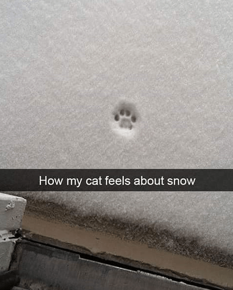 cat nopes snow paw print