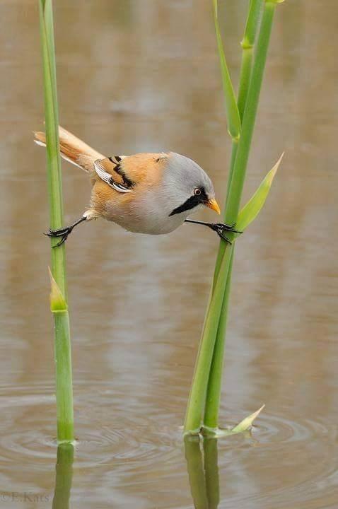 Bird - CEKtS