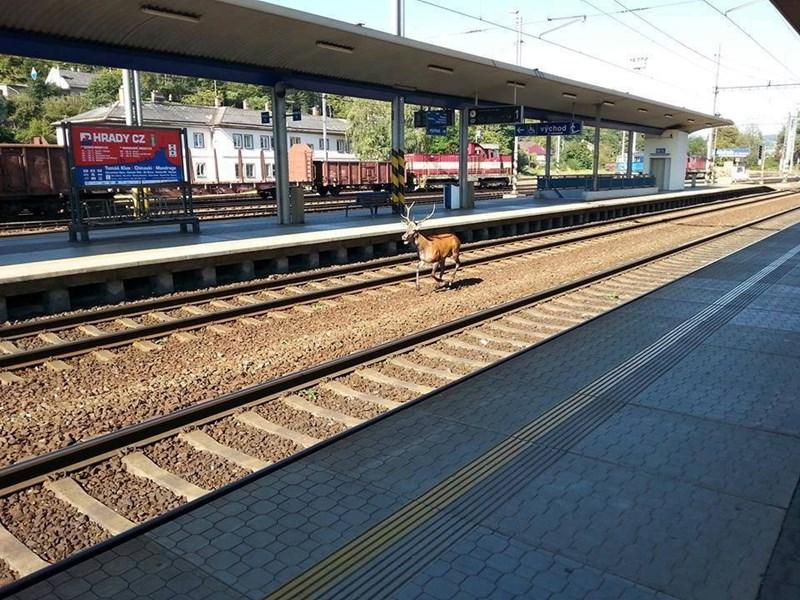 Transport - východ HRADY CZ Tem OCinashi Mandrage