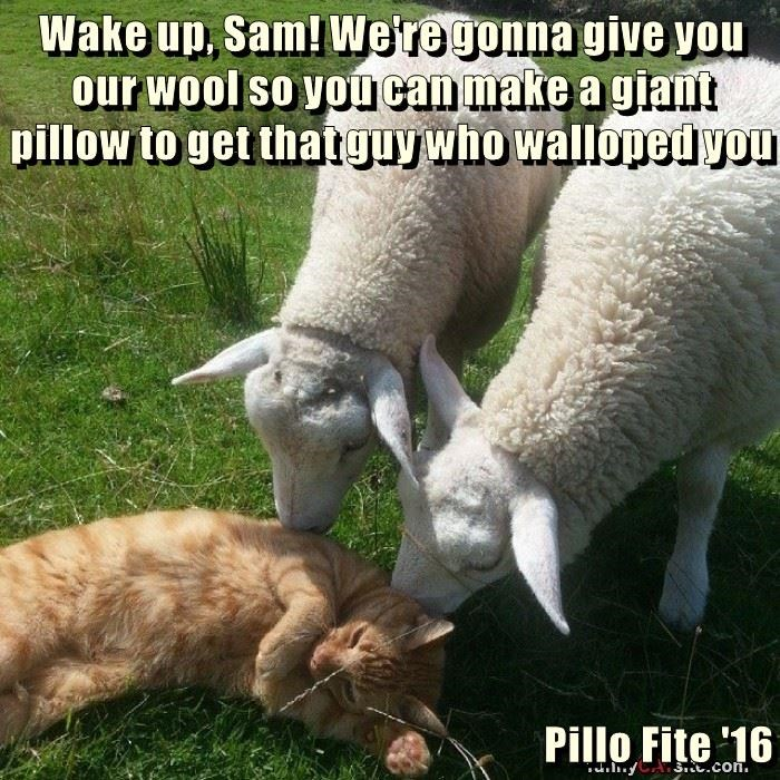 Wake up, Sam! We're gonna give you our wool so you can make a giant pillow to get that guy who walloped you  Pillo Fite '16