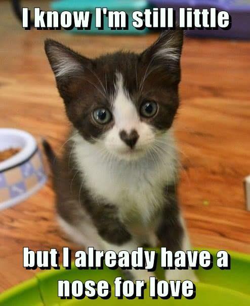 know kitten nose love caption little - 8994462720