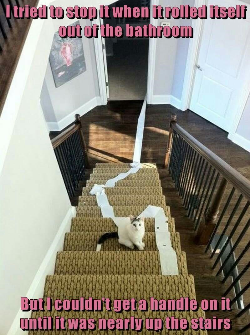 cat bathroom caption stairs up rolled tried stop