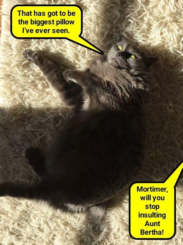 cat aunt bertha biggest caption insulting Pillow stop - 8994479360