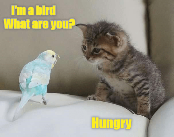you cat hungry what bird caption - 8994481920