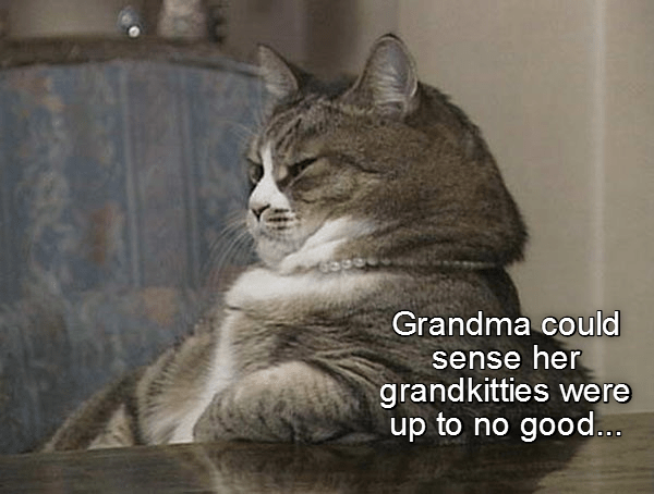 cat caption grandma up no good sense grandkitties