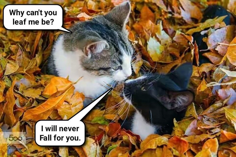 Cats caption fall leaf me you - 8994579968