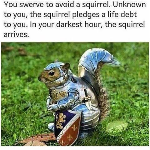 life debt squirrel meme