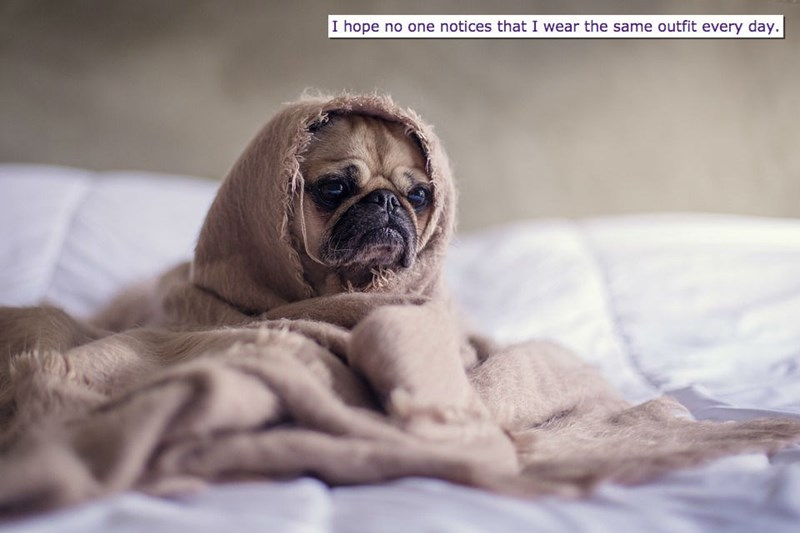 Pug - I hope no one notices that I wear the same outfit every day.