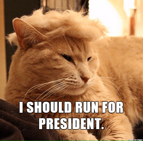 Cat - I SHOULD RUN FOR PRESIDENT di32 on imgur