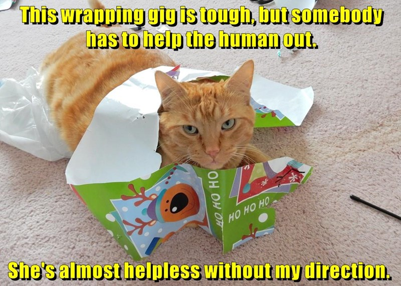 cat wrapping direction helpless help tough caption