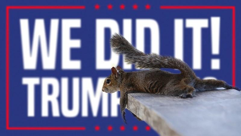 Squirrel - WE CDIT! TRUM
