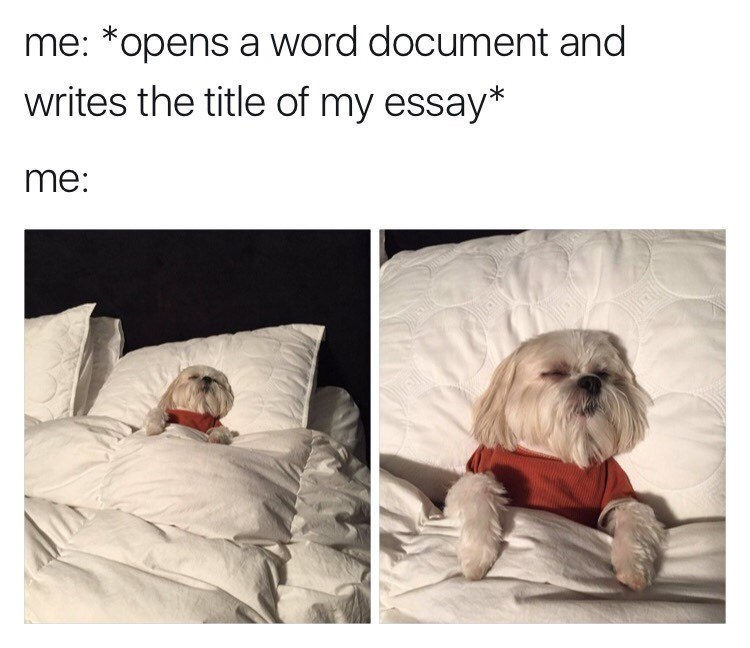 dogs,nap,accomplishment,image