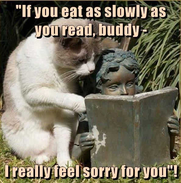 slowly cat read feel sorry caption - 8995343104