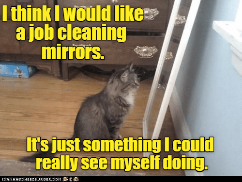 Job Search Lolcats Lol Cat Memes Funny Cats Funny Cat Pictures With Words On Them Funny Pictures Lol Cat Memes Lol Cats