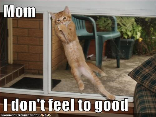 cat,feel,dont,good,caption,mom