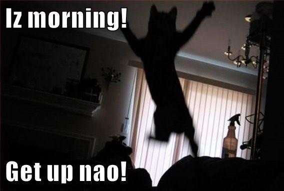 cat,now,morning,get up,caption
