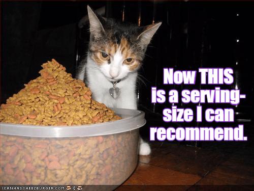 cat size caption - 8995425792
