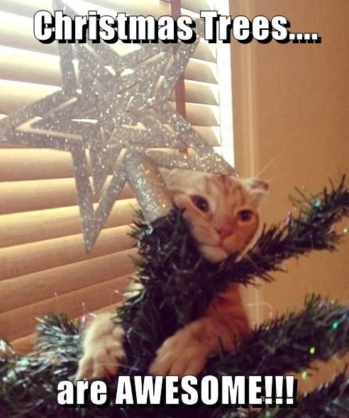 cat,christmas tree,awesome,caption
