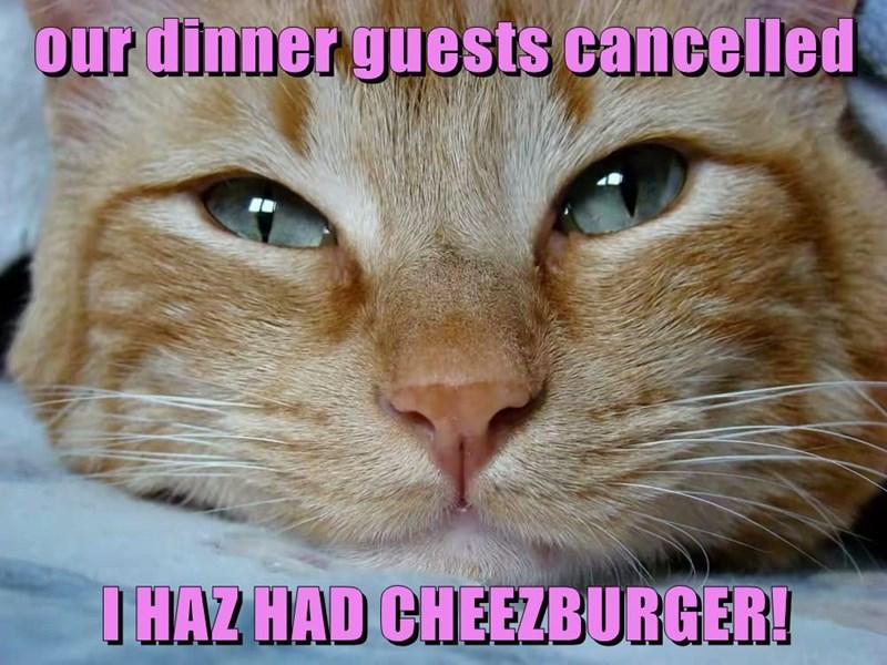 Cheezburger Image 8995453440