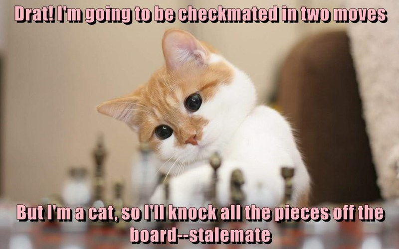 cat checkmated pieces off moves knock caption two