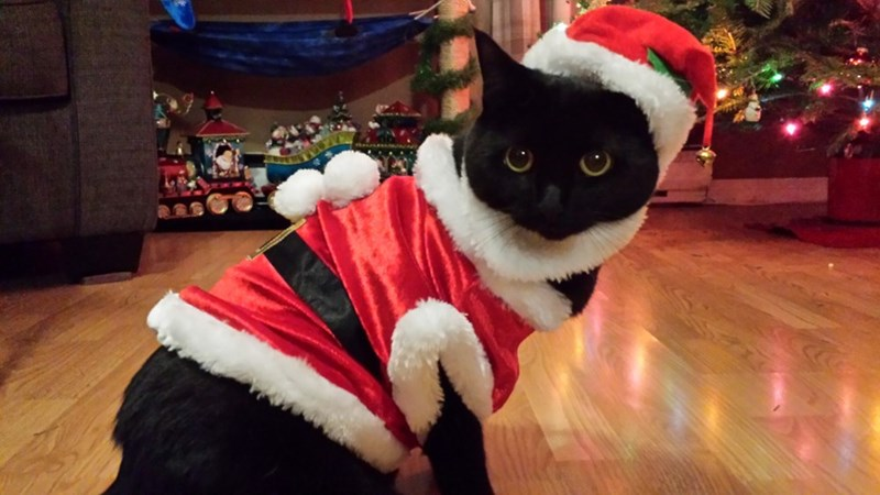 costume christmas santa Cats - 8995577856