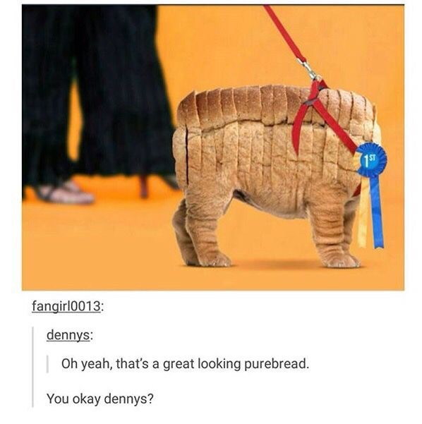Elephant - fangirl0013: dennys: Oh yeah, that's a great looking purebread. You okay dennys?