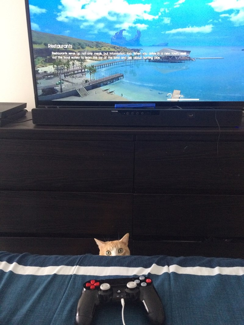 khajiit Cats Skyrim - 8995637760