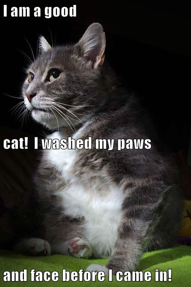 cat came caption before - 8995682560