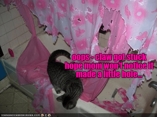 notice claw cat homestuck hole wont caption little - 8995758336
