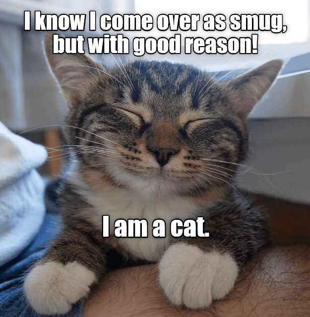 cat reason good caption smug - 8995761152