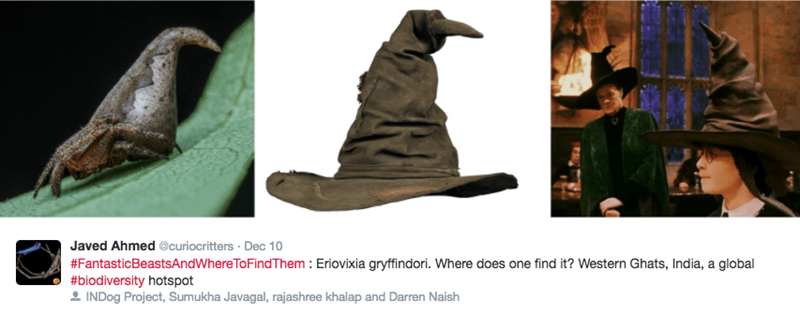 scientists find spider in india that looks like harry potter sorting hat