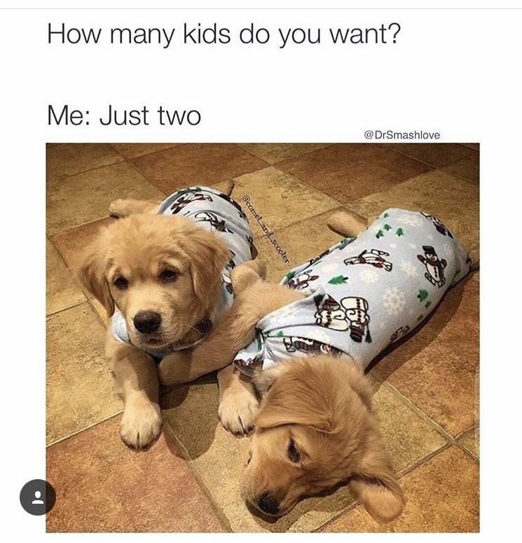 kids puppy Memes pajamas - 8995828736