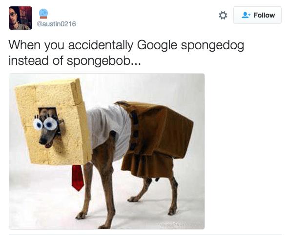 Product - Follow @austin0216 When you accidentally Google spongedog instead of spongebob... WEBNORE