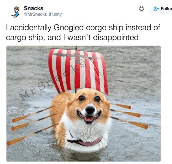 Dog - Snacks @MrSnacks_iFunny Follo I accidentally Googled corgo ship instead of cargo ship, and I wasn't disappointed Mr Sna