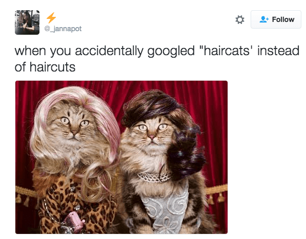 """Cat - Follow _jannapot when you accidentally googled """"haircats' instead of haircuts"""