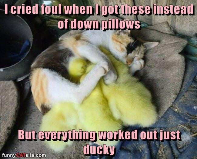 cat foul everything pillows down cried ducky caption