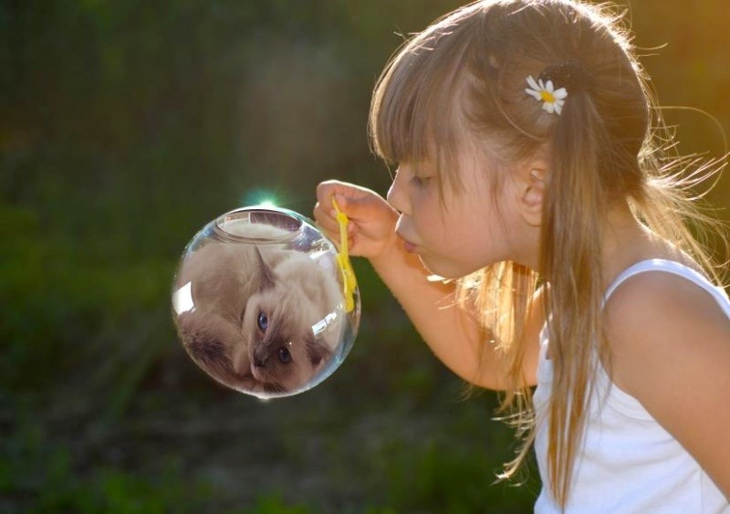 cat fishbowl photoshop battle - Hair