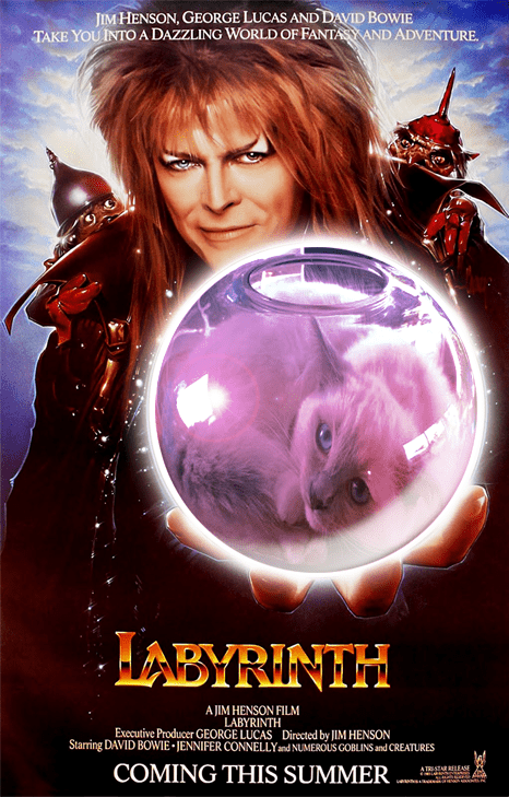 cat fishbowl photoshop battle - Movie - JIM HENSON, GEORGE LUCAS AND DAVID BOWIE TAKE YOU INTO A DAZZLING WORLD OF FANTAS AND ADVENTURE HABYRINTH A JIM HENSON FILM LABYRINTH Executive Producer GEORGE LUCAS Directed by JIM HENSON Starring DAVID BOWIE JENNIFER CONNELLYand NUMEROUS GOBLINS and CREATURES COMING THIS SUMMER ATRISTARRELEASE weaeha