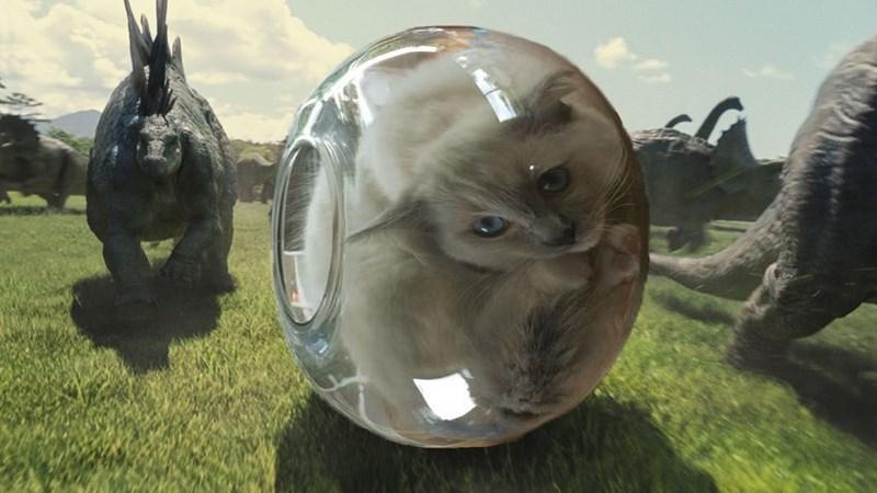 cat fishbowl photoshop battle - Helmet