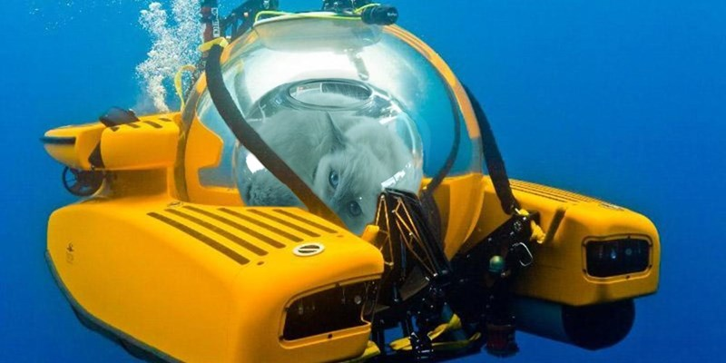 cat fishbowl photoshop battle - Motor vehicle