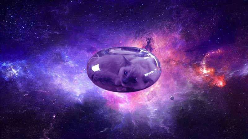 cat fishbowl photoshop battle - Outer space