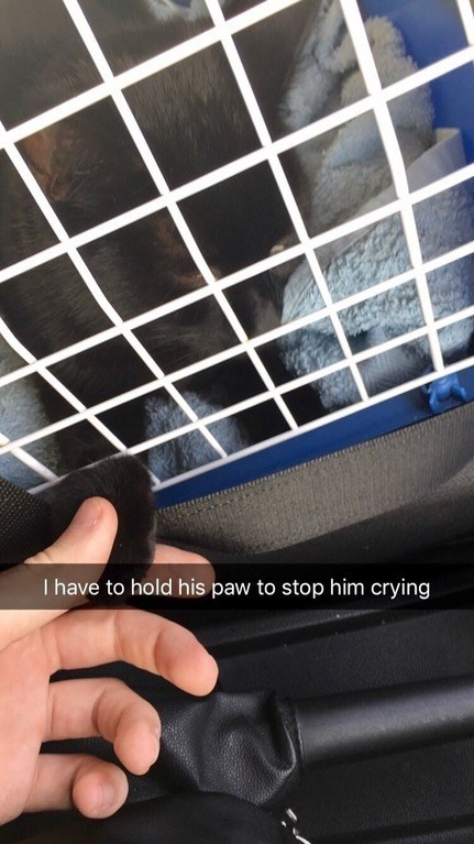trips to the vet can be so stressful