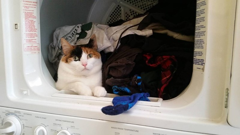 laundry Cats - 8996045824