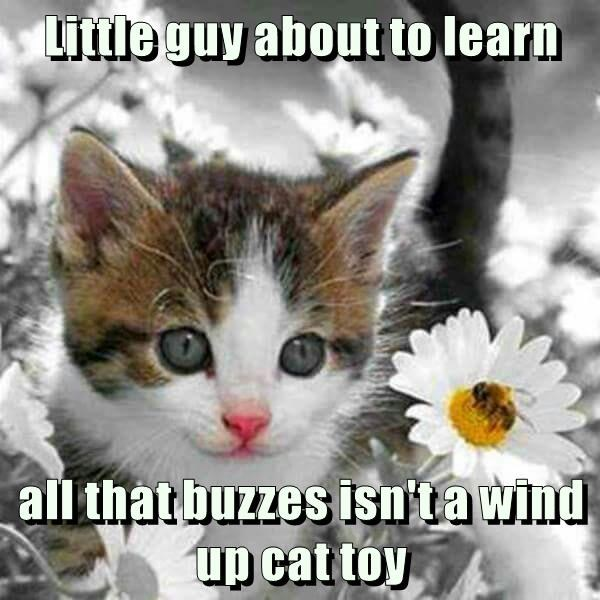 buzzes wind up toy learn kitten caption - 8996148992