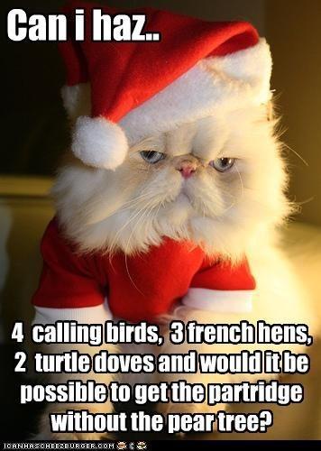 pear tree christmas cat lol - Cute Christmas Captions